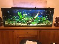 4 foot fish tank free local delivery