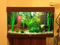 "Juwel 31"" long Aquarium"