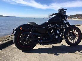 Harley Davidson low 883 iron