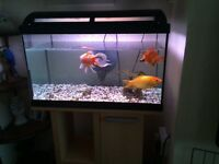 Goldfish with tank and cabinet