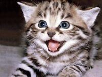 MISSING CAT ADS - BEWARE