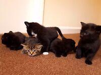 lovely kitten forfor sale