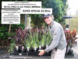 Looking for CHEAP plants - CHECK THESE OUT - All under $10 - WOW! Mudgeeraba Gold Coast South Preview