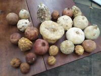 Collection of dried ornamental fruits