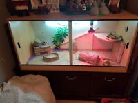 2 year old male bearded dragon + viv and accessories
