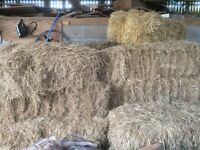 25 Bales of old Hay for sale