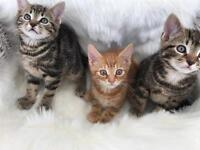 kittens. text or call on. 07424328978