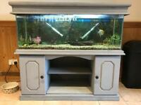 4' fish tank including fish and accessories
