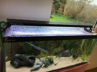 3ft Clear Seal Tropical Aquarium