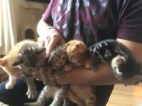 We are now looking for our forever homes in approx 2-4 weeks, we are just over 6 weeks