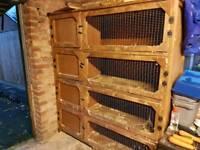 4 tier rabbit hutch