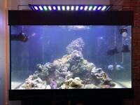 Marine aquarium / fish tank