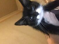 2 beautiful black and white kittens 12 weeks old and two black and white kittens 4 months old