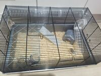 2 russian dwarf hamsters and cage