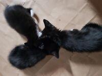 Happy playful kittens