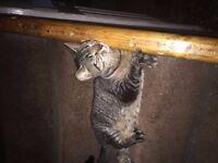 CAT NAMED RIPPLE (FEMALE) FOUND HER IN MY GARDEN 5 MONTHS AGO