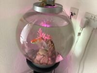 60 litre biorb with 4 fish and pedestal
