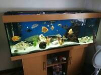 Fish tank juwel 5 foot
