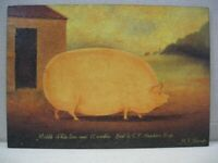 Middle White Sow Aged 15 Month Art Pig Print Mounted On Board by M.R. Wiscombe