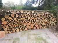 Tree logs stump trunks
