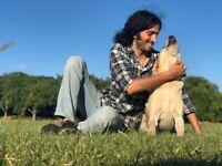 Tax Registered+Fully Insured/Veterinarian Pet Sitter/Dog Sitting-Walker-Boarding/Cat Sitter