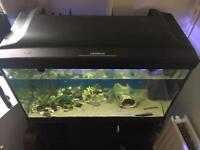 Fish tank, cabinet & equipment. Approx 120L