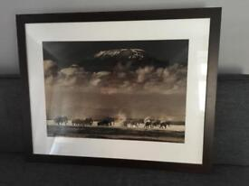 Habitat Elephants and Kilimanjaro print with dark brown frame