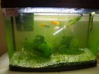 64 ltr tropical Fish tank for sale with fish