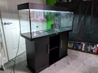 Juwel Rion 240 Aquarium/fish tank with stand and filter (no media)