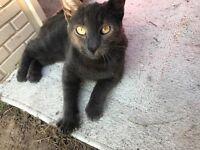 Cat male very friendly