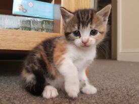 5 beautiful kittens basildon