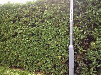 AJP Garden Services - regular maintenance and one offs.