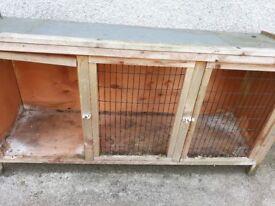 Hutch rabbit or guinea pig