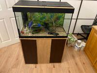 Fluval Roma 125 beech tropical marine fish tank Setup aquarium (delivery installation)