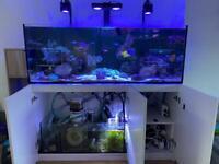Red Sea Reefer 450 + Kit + Livestock