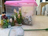 Starter Fish Tank