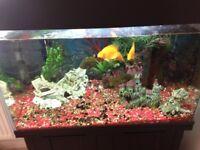 Fish tank incl. fish