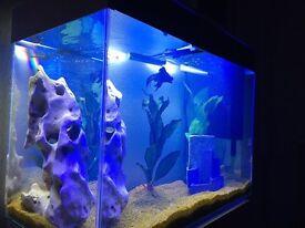 Ciano aquarium 100lt