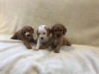 5 stunning puppies
