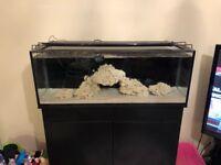 Innovative marine 30l fish tank