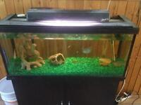 Fish Tank (Fish & excessories included)