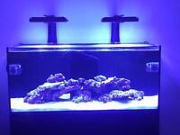 Red Sea Reefer 350, Radions,MP40 QD, Nyos Skimmer