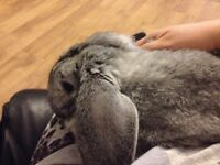 Lovely grey rabbit