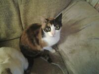 Hi i am a very pretty little female cat in need of a new home.