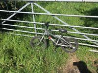 Kids Ridgeback bike 🚲