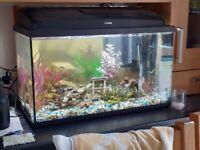 Aquael 90 litre tank,accessories and fish