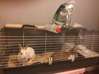 Rabbits and accessories