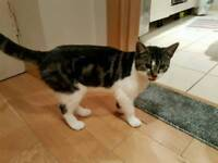 Female cat for free