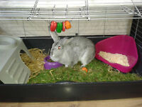 6 month old female rabbit with cage and box of supplies