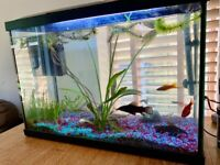 60 Litre Fish Tank with CatFish, Guppies and others...